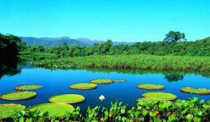 Brasile - Viaggio - vacanza - natura