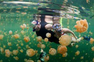 meduse mediterraneo